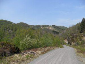 Håland ligger på toppen rett fram, til venstre for granskogen
