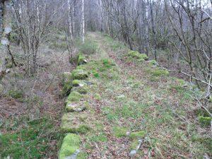 Parti av veien fra Frøytlog til Toks