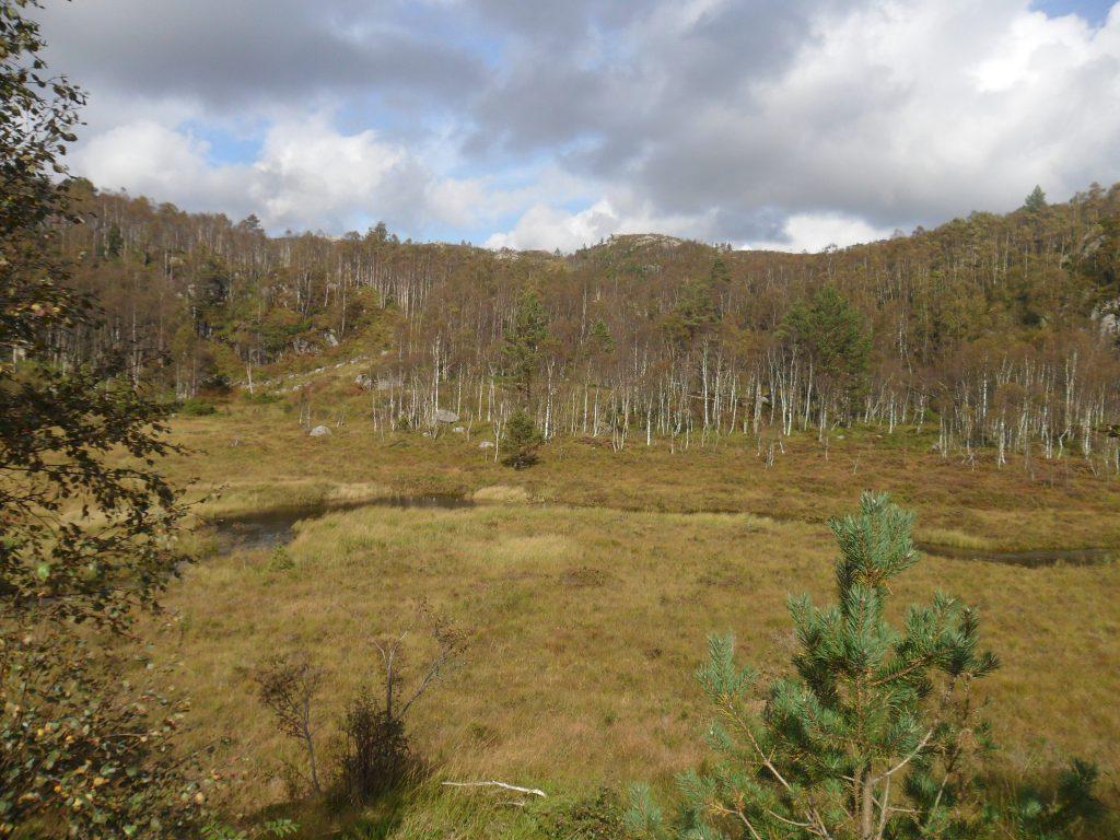 Myra mellom Torjetjødn og Stivlo